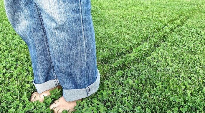 Jeans a zampa